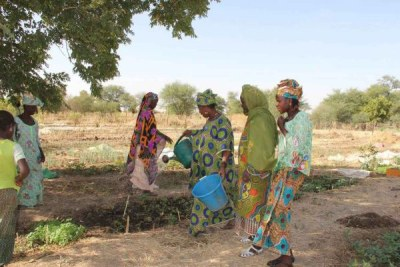 Drought in the Sahel region has made agriculture difficult for women in Yelimne, Mali.