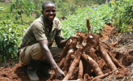 Chinese Firm to Invest U.S. $1 Billion in Cassava in Tanzania