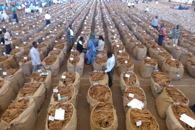 Tobacco farmers at auction floor (file photo).