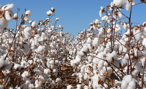Tanzania Cottoning-On to Potential Economic Boost