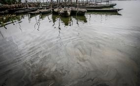 Oil on Nigerian mangroves