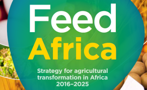 Strategies to Feed Africa & Provide Jobs for Youths - AfDB