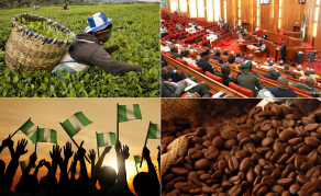 Tea Anyone? Nigeria's Tea, Coffee Bill to Help Diversify Economy