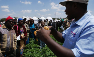 Struggling Potato Growers Ink a New Deal in Kenya
