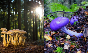 Fungi Have Sex - Here's How, and Why It Matters