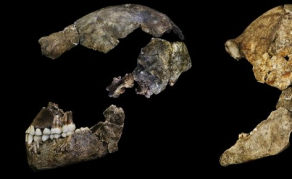 Homo Naledi Had a Small Brain - But Packed a Big Punch