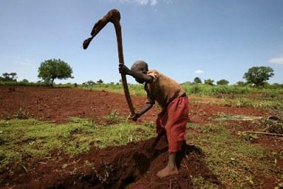Un jeune cultivateur ougandais creuse une digue de drainage d'eau