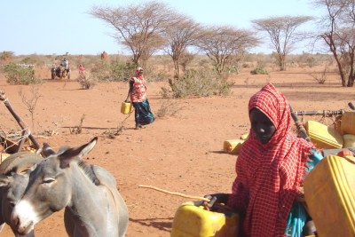 In the drought-ravaged Gedo region of Somalia, obtaining water can involve treks of 20km or more.