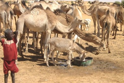 A child with camels, donkeys and goats at the watering place near the village of Makanga, north of Tanout, Southern Niger.