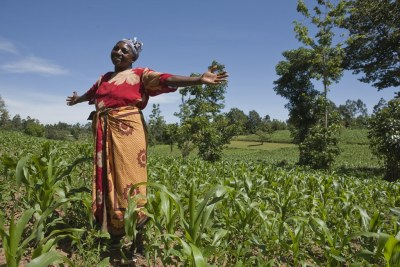 Beth Njambi,  who also grows cassava and bananas to provide her family food year-round, standing in her maize field.