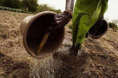 A woman watering soil to prepare the ground before planting (file photo).