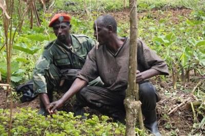 Militiaman with a farmer at a coffee plantation near Kalonge, on the borders of Masisi and Walikale territories in North Kivu.