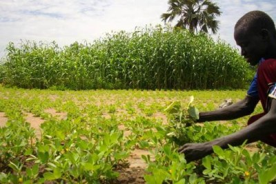 Planting the seeds of a better future in South Sudan