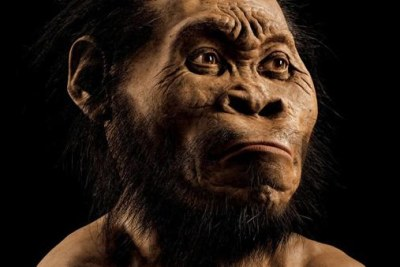 Artist Gurche spent some 700 hours reconstructing the head of Homo naledi from bone scans, using bear fur for hair (file photo).