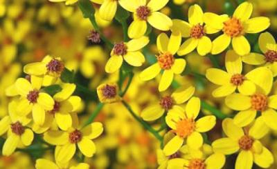 Ethiopian Flowers Photos - Flowers Healthy