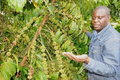 A coffee farmer in his garden.