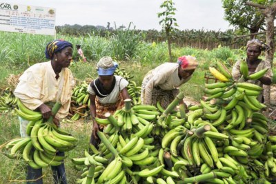 Farmers in Cameroon (file photo).
