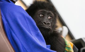 Onze ONG écrivent à Kabila et Kagame pour le déminage du parc des Virunga