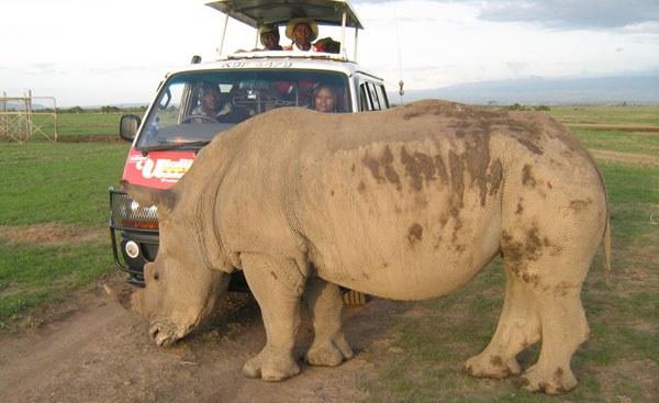 Kenya Strives Toward Saving Northern White Rhino
