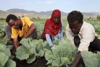 Youth tending to their vegetables as part of an FAO initiative supporting young people at risk of migrating. Creating farming and rural, off-farm opportunities key to address migration.