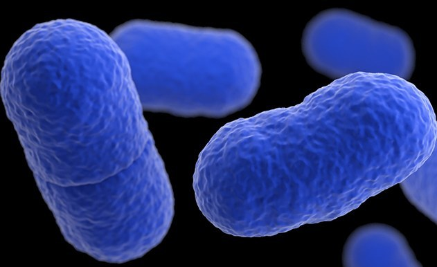 Listeriosis Case Could Be Delayed 'For Years' in South Africa
