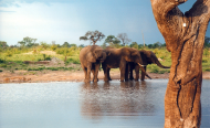 How Elephants and People Can Live Together in Peace