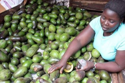 A trader selling avocados at a market in Nairobi (file photo).