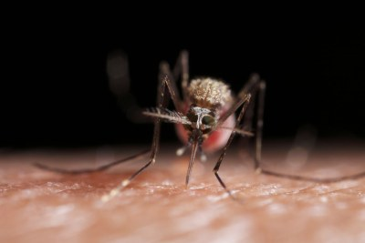 Malaria is transmitted to humans by mosquitoes.