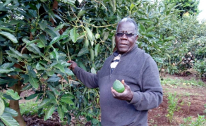 China's 'Absurd' Conditions Threaten to Choke Kenya Avocado Deal