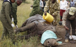 Black Rhino Deaths 'a Major Step Back' for Kenya Conservation