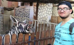 Donkeys Earning Their Stripes? - Photos of 'Fake Zebras' Go Viral