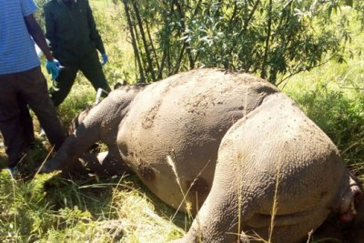 Kenya Wildlife Service have confirmed the killing of the 12-year-old male black rhino.