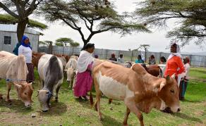 EU Sign U.S.$34 Million Loan for Women Entrepreneurs in Ethiopia