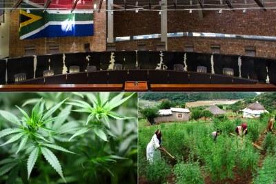 Top: Constitutional Court. Bottom-left: Marijuana leaves. Bottom-right: Marijuana farming community in Pondoland in the Eastern Cape.