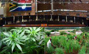 Turning Over a New Leaf - ConCourt Decriminalises Marijuana Use