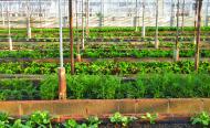 How Good Urban Farming Can Combat Bad Eating