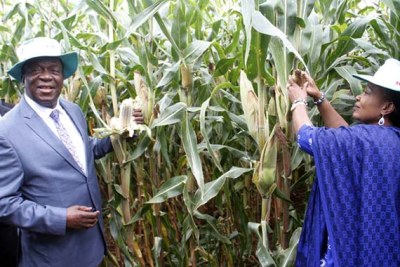 President Emmerson Mnangagwa and First Lady Auxillia Mnangagwa assessing their maize crop at their farm (file photo).