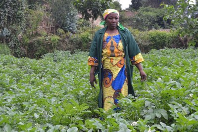 A Nyabihu-based professional Irish potatoes farmer stands in her plantation (file photo).