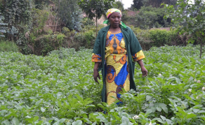 New App for Rwanda's Potato Farmers