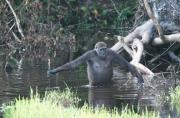 25 ans du parc national de Nouabalé-Ndoki au Congo Brazzaville