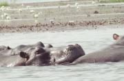 Le Lac de Tengrela sous la menace d'une dégradation au...