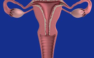 'Set Your Ovaries Free', Magufuli Tells Tanzania Women