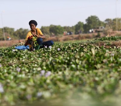 Burkinabe Woman Turns Menace of Water Hyacinth Into Biogas