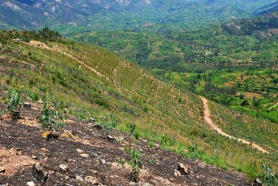 A reforestation project in Muhanga District.