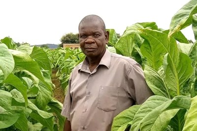 Griffins Kaliza in his tobacco farm in Malawi's central Mchinji dsitrict.